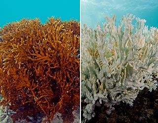 Reef Safe Sunscreens For Healthy Corals